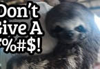 dont give a fudge sloth
