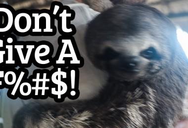 dont give a fudge sloth